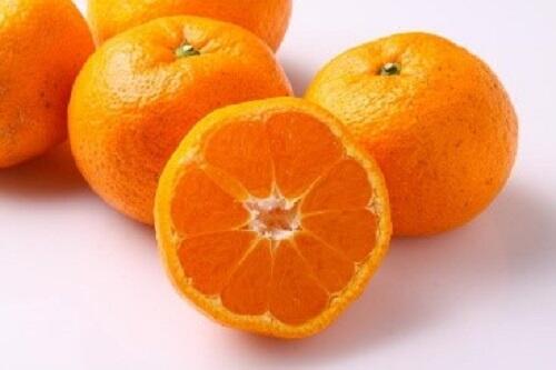 柑橘 はるみ 大粒でプチプチした果肉がとってもジューシー!愛知県蒲郡産はるみ(みかん)編💗有楽青果部看板娘おすすめ果物