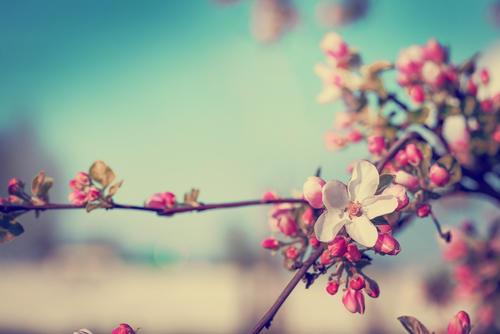食べ物 立春