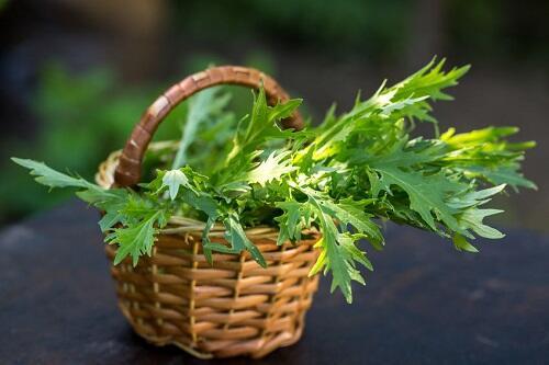 水菜 カロリー