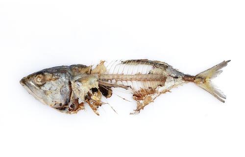 骨 が 痛み な よう 喉 た 刺さっ 魚の