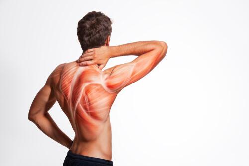 筋トレと適度な休みが筋肉を成長させる!筋トレの最適な頻度と休み方 | 身嗜み | オリーブオイルをひとまわし